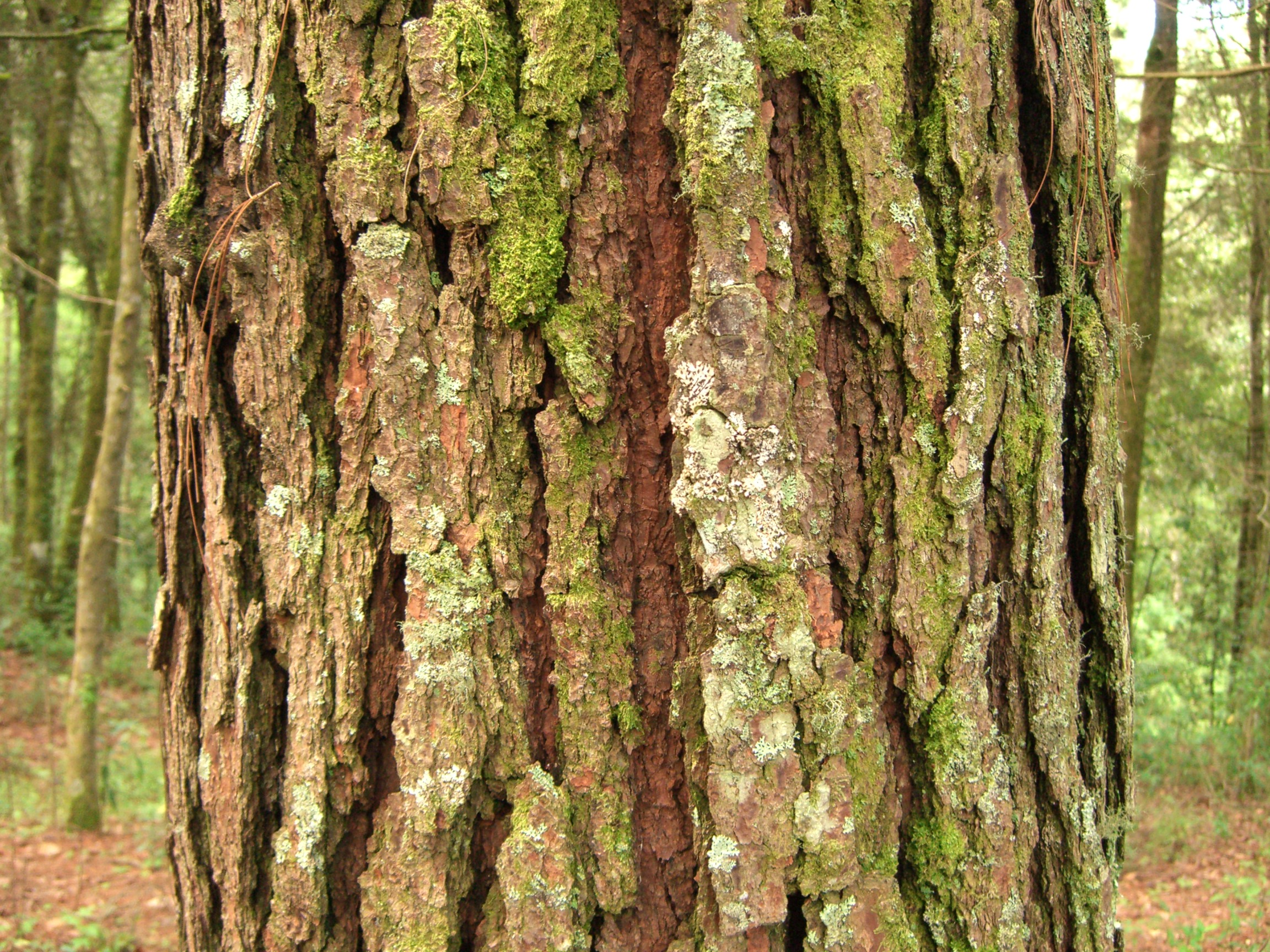 Pine Bark P.E. Market Research Report 2018 – 2023: Business Segments, Position and Forecast