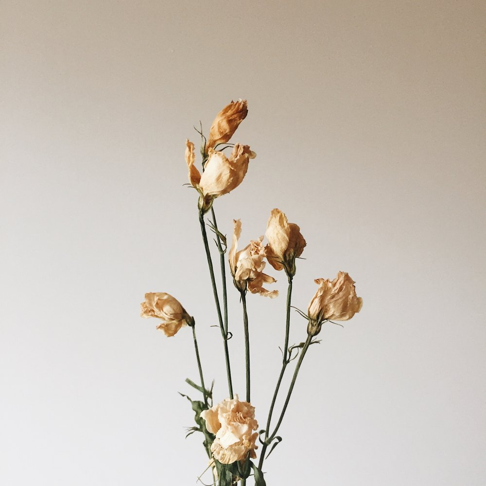 Global Dried Flowers Market Has Biggest Growth Rate In 2025?