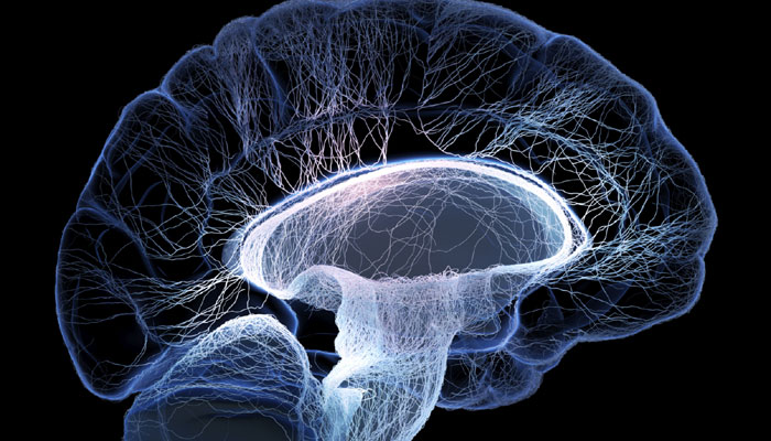 Global Neuroprotection Industry 2019 Planet Market Report
