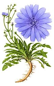 Chicory Market 2019 Industry Size, Overview, Industry Analysis, Status and 2025 Forecasts