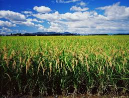 Agricultural Crop Insurance Industry 2023-Production, Regional Analysis, Market Share and Forecast