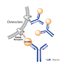 Denosumab Market 2019 Industry Regional Segmentation, Size, Share, Growth, Sales, Cost Structure and 2025 Forecasts Analysis