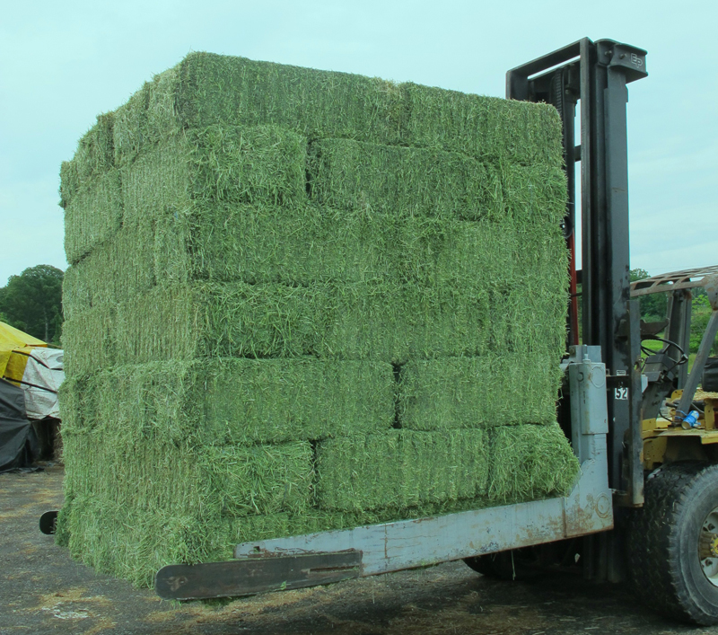 Global Alfalfa Hay Market Dynamics 2019: Opportunities, Risks and Driving Factors to 2023
