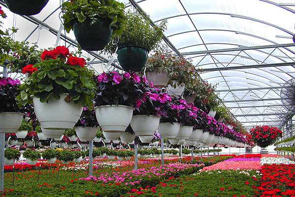 Consumer Floriculture Global Market size will reach US$ 51600 million by 2024, from US$ 48100 million in 2019.