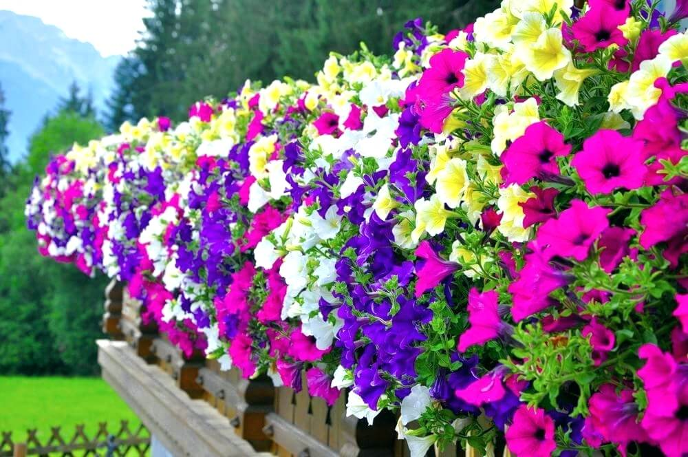 Flower Pots and Planters Market: Global Key Players, Trends, Share, Industry Size, Growth, Opportunities, Forecast To 2024