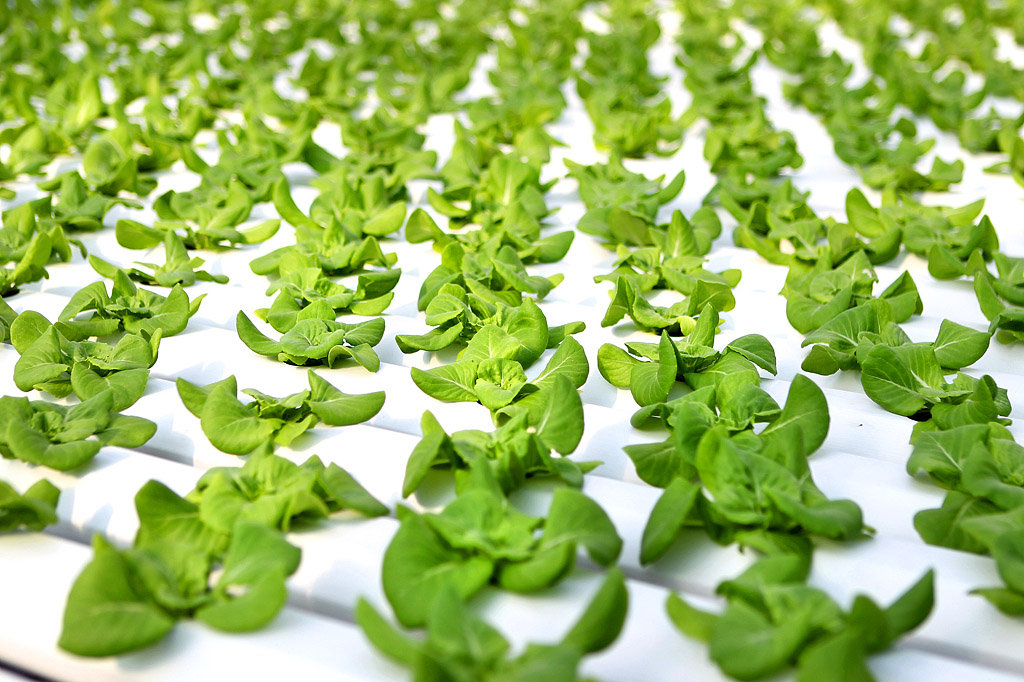 Hydroponics Technologies Market Size, Trends, Emerging Market Trends And Forecast By Players and Types By 2023