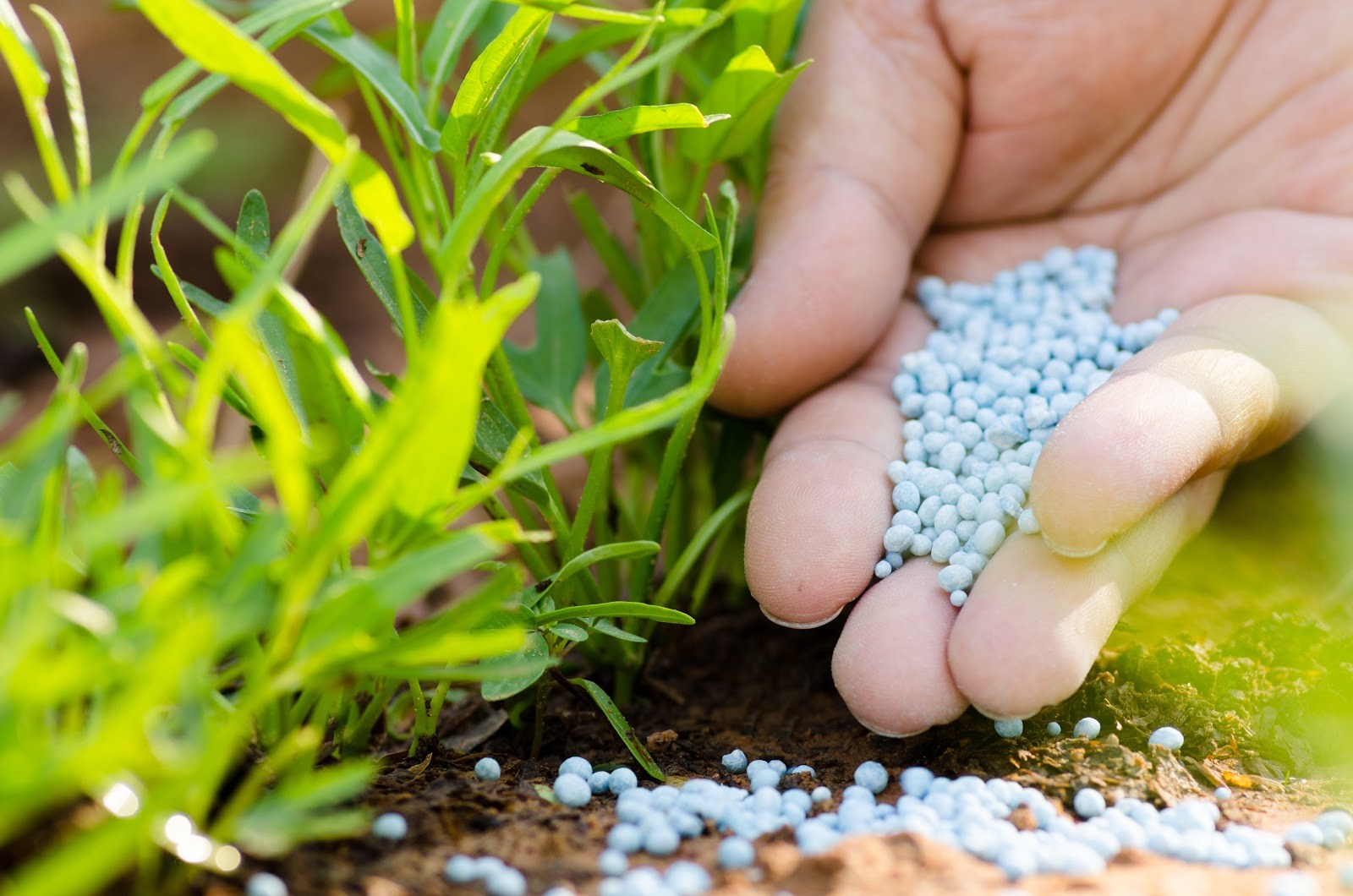 Nitrogenous Fertilizer Market Size, Share, Supply, Demand, Segments and Forecast 2019-2023
