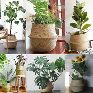 Nursery Planters and Pots Market 2019 | Manufacturers, Regions, Type and Application, Forecast to 2024