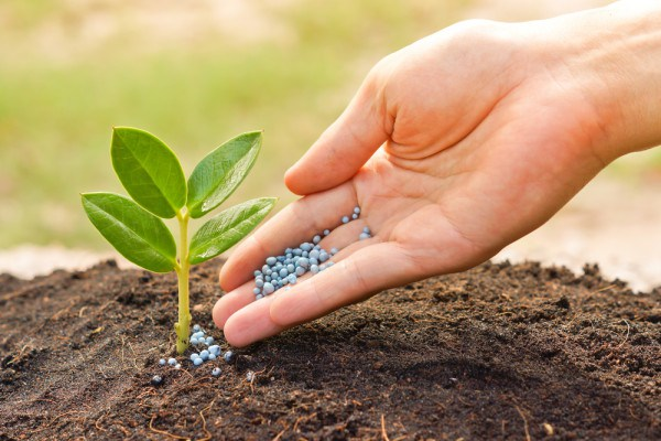 Silicon Fertilizer Market 2019-2024 by orchard with the share of about 37%.