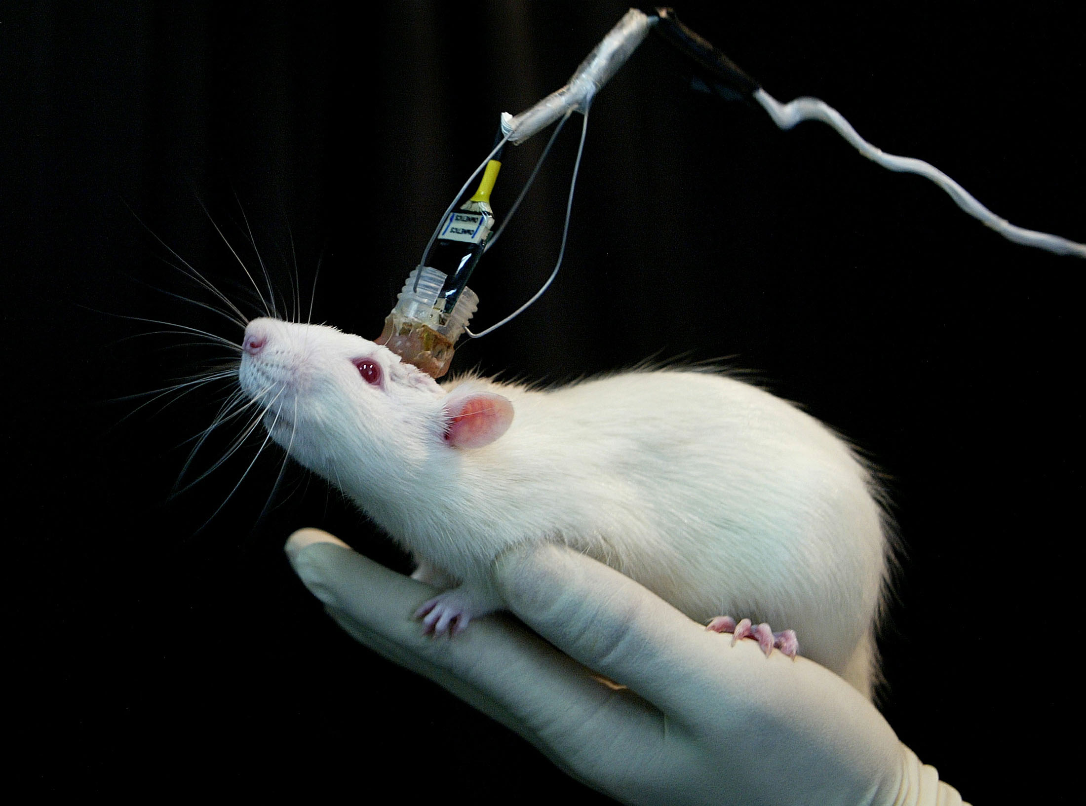 Global Optogenetics Market Size, Share Growth Trend and Forecast 2024