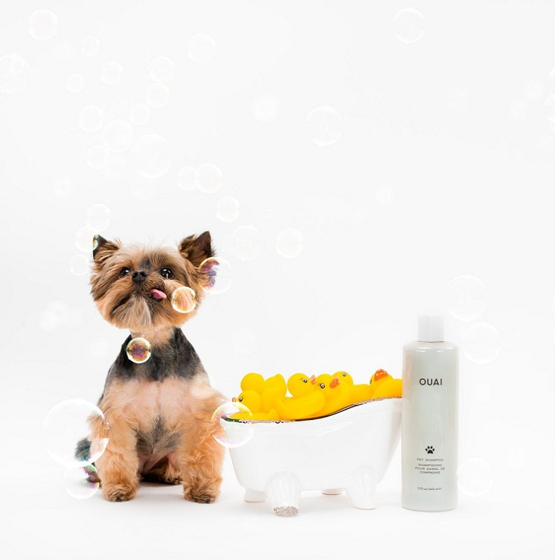 Global Pet Shampoo Market Size, Demand, Growth & Revenue