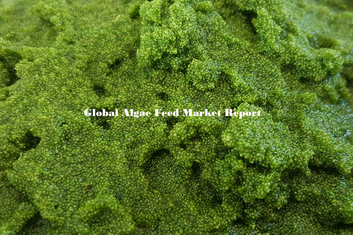 Algae Feed Market Research and Business Analysis and Industry Growth Report by 2024