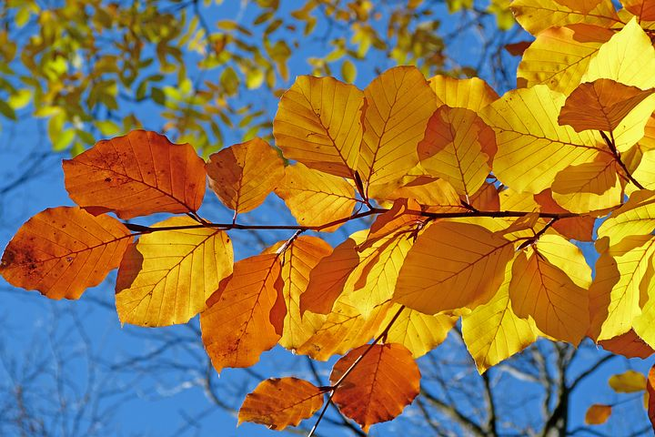 Global Beech Market Growth Opportunities 2019 with Leading Companies- Arsov 90, Pollmeier Massivholz, Sgewerk Bamanufacturing and more...