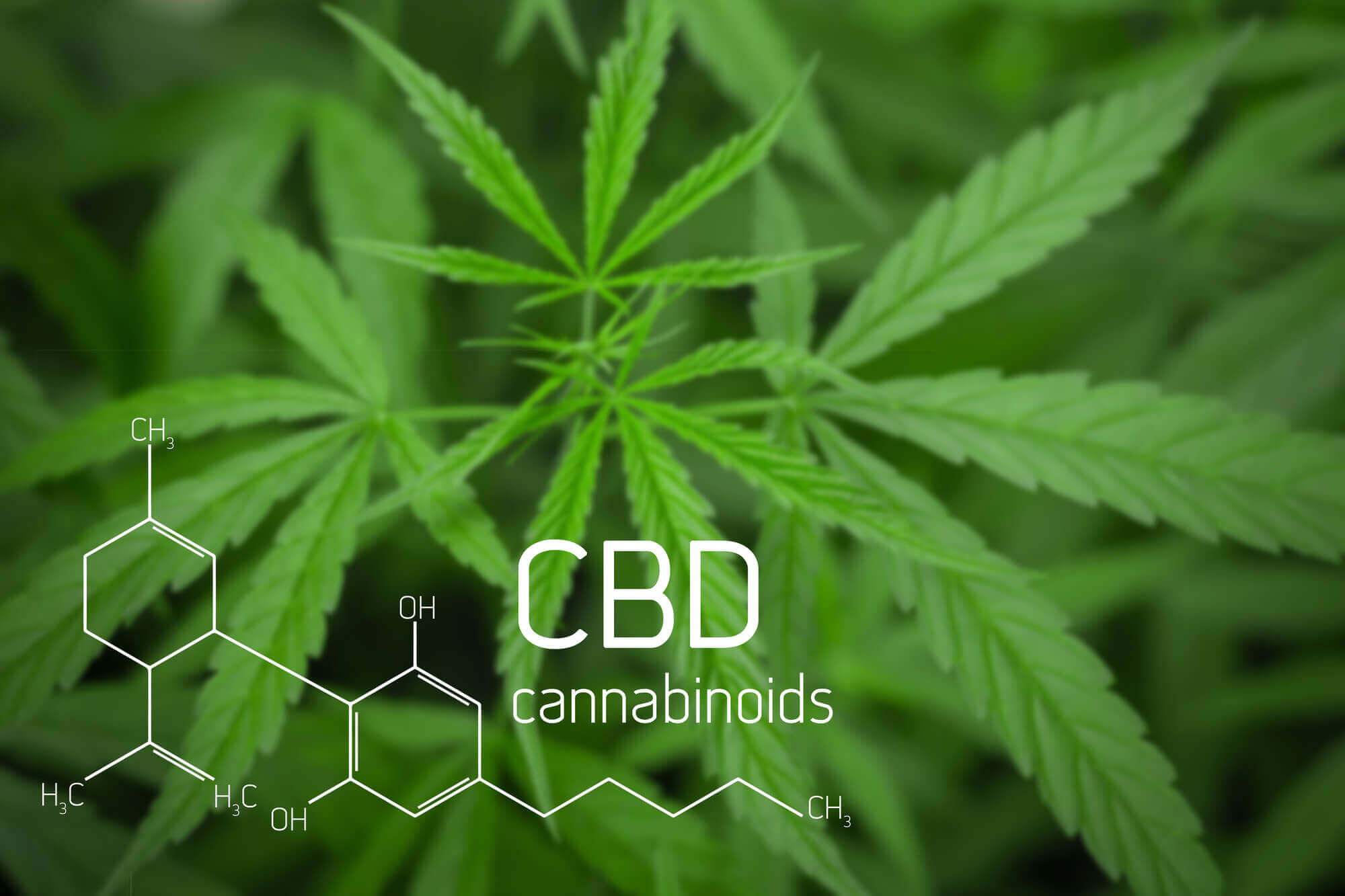 Cannabidiol (CBD) Market to Register a CAGR of 33.5% by 2025, Predicts QY Research
