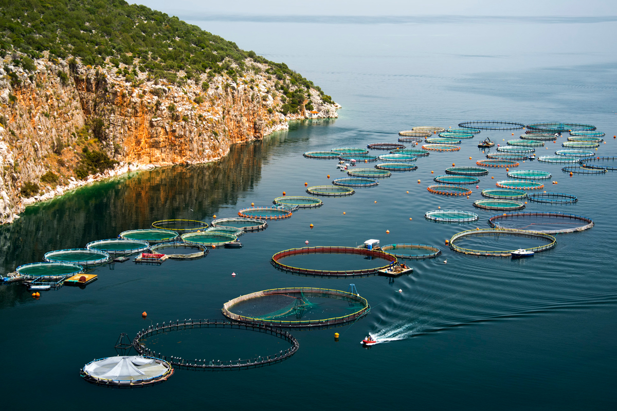 Aquaculture Market Growth Prospects, Key Vendors, Future Scenario Forecast to 2027 | NIRI AS, Selonda Aquaculture SA, Stolt-Nielsen Limited, TASSAL, Thai Union Group PCL