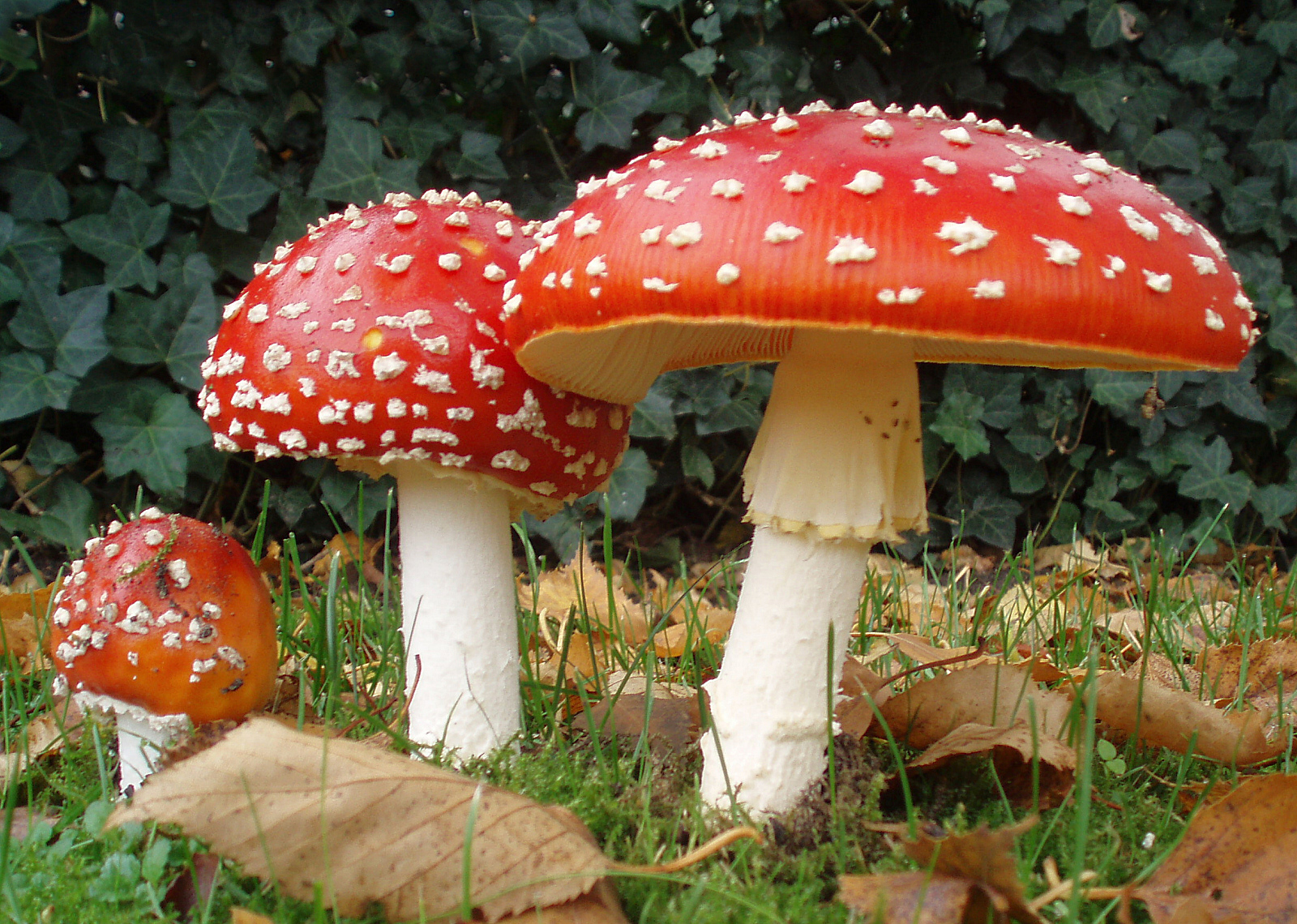 New Profitable Statistical Research Report on Mushroom Market 2019 with Profiling Global Key Players Like Bonduelle Fresh Europe,Christiaens Group,Costa Group,Drinkwater's Mushrooms Limited