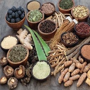 Traditional Ayurvedic Medicines Market Is Booming Worldwide with Himalaya Drug, Emami Group, Maharishi Ayurveda, Baidyanalh