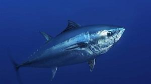 3485 1633587852.tuna market